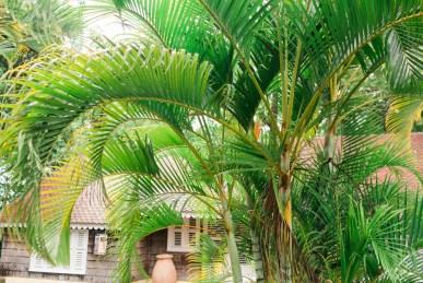 Blanccoco_Photographe_Martinique_Rhum_Clement_Depaz_Saint_Pierre_Grand_Riviere-73