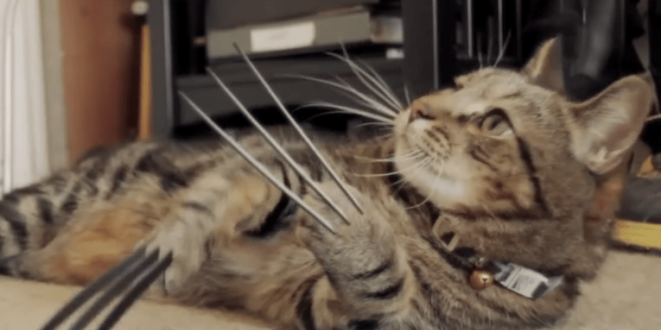 Wolverine Cat has better visual effects than X-Men Origins: Wolverine   SyfyWire