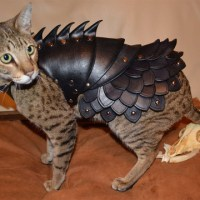 Leather battle armor for totally badass cats