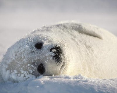 Animal Magic: Seal – embracing playfulness and creativity!