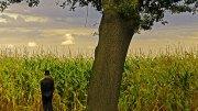 Ein Tod im Maisfeld, der ist immer frei, denn es ist Sommer... © L.W. Antonius