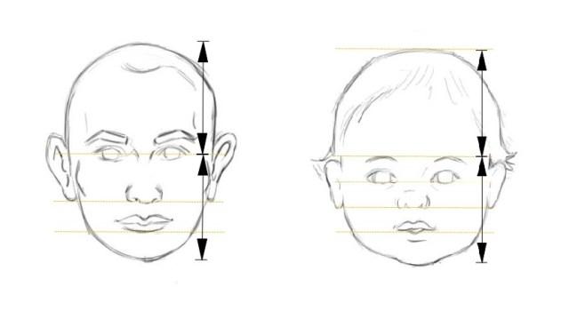 La tête d'un enfant en comparaison avec celle d'un adulte