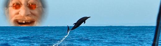 solongfish