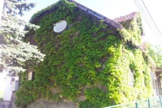 Neobična kuća od bršljena porodice Radaslić iz 1938. godine u Semizovcu
