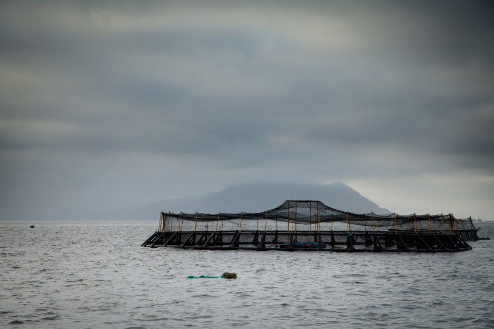aquaculture nets