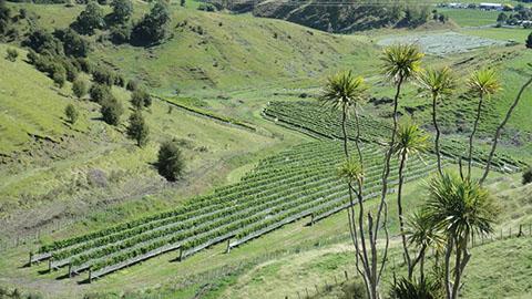 Linden Estate NZ