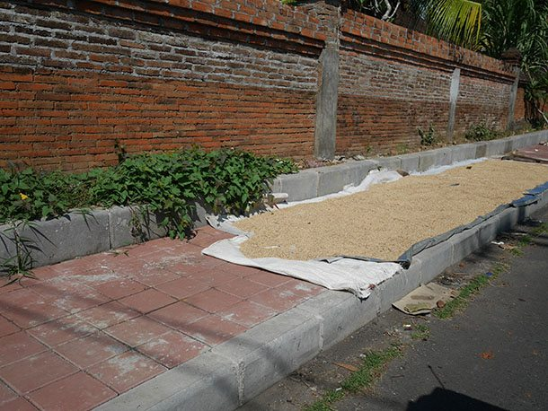 rice drying on road