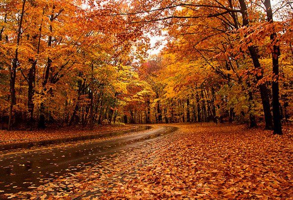 Fall In New England Wallpaper The Top 10 Places To See Fall Foliage In Toronto