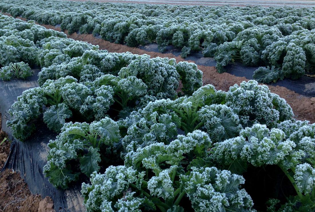 Blooming-Glen-Frost
