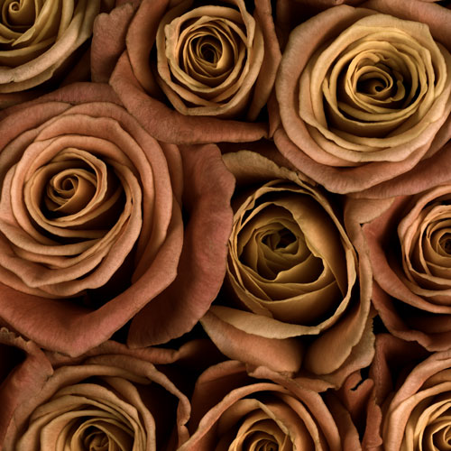 Orange Fall Peonies Wallpaper Types Of Flowers For Weddings Bloomsbythebox Com