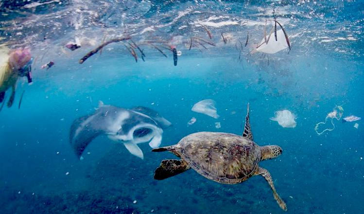 who wants to swim in this mess? wwwoceangarbagepatchorg Ocean - marine biologist job description