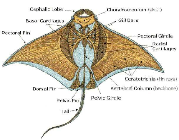 Wiring A Bat Diagram Wiring Diagrams
