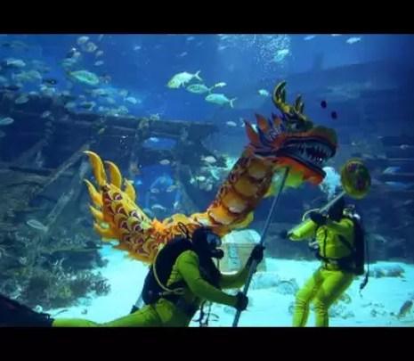 Podwodny chiński Nowy Rok w akwarium morskim