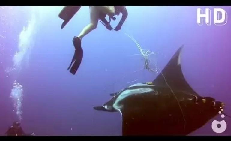 Czy nurkowanie powoduje większą wrażliwość u ludzi?