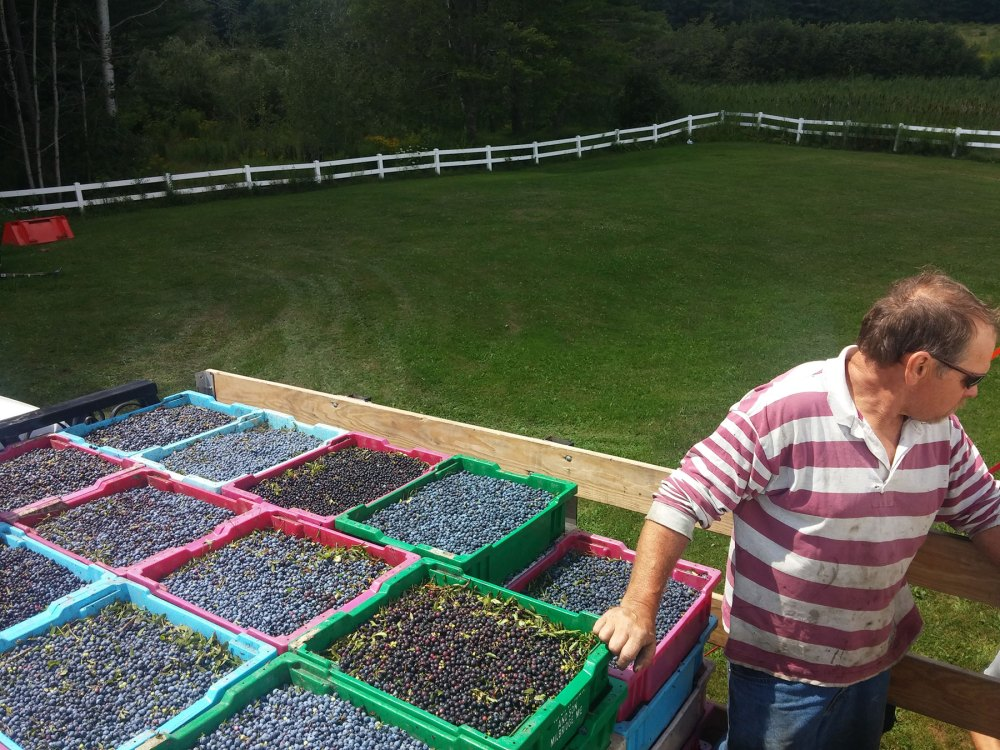 John Boyington delivering the family's Appleton Ridge blueberries
