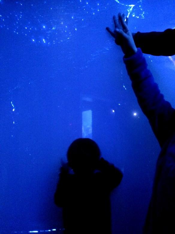abysses-aquarium-la-rochelle-03