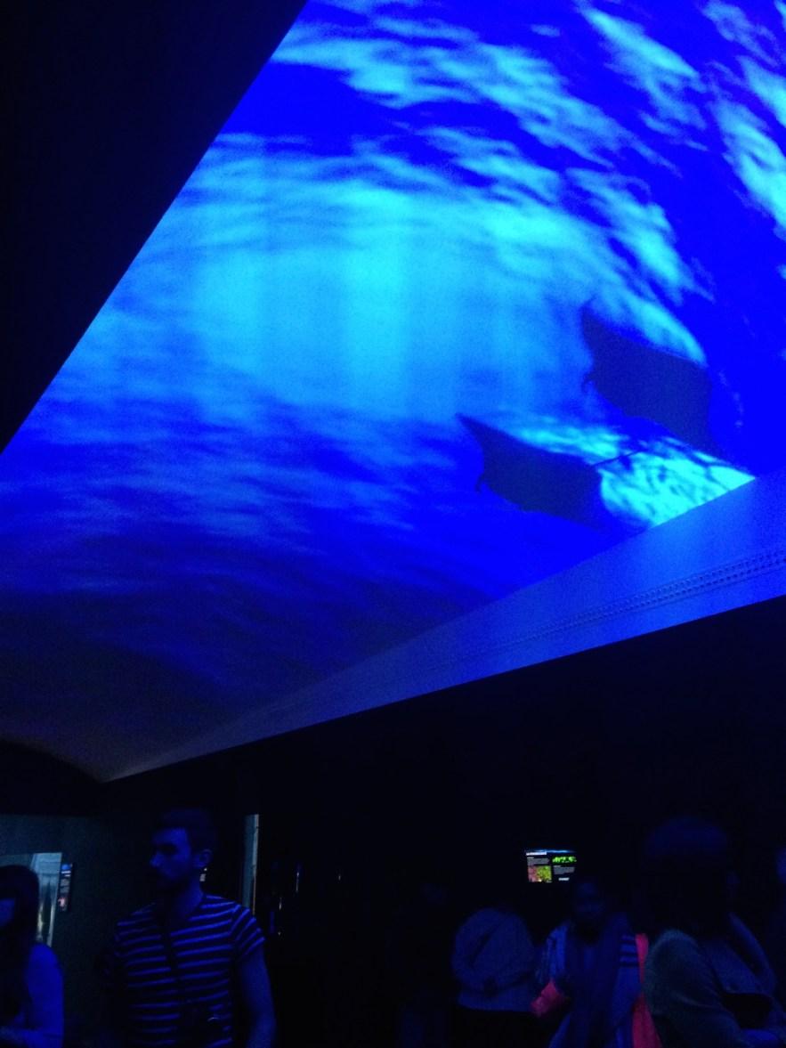 abysses-aquarium-la-rochelle-04