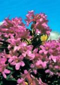 Zimmer 2 - Alpenrose