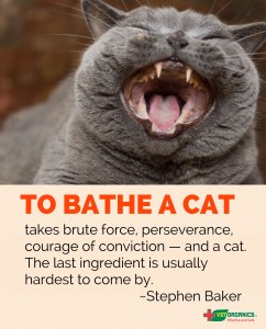 how to wash a cat by Vet Organics