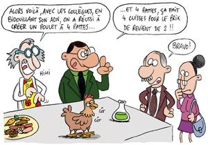 sti_poulet