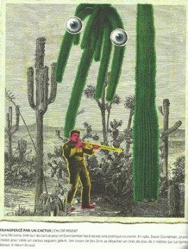 citrus2_cactus