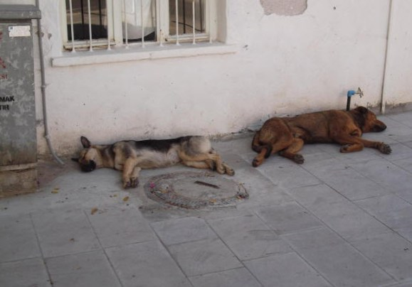 2 sleeping dogs in Bodrum Turkey
