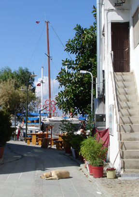 Yalikavak Bodrum Peninsula Street Dog, Turkey