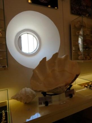 Bodrum Maritime Museum Shell Exhibit Bodrum Turkey