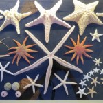 Starfish at Bodrum Maritime Museum Shell Exhibit Bodrum Turkey