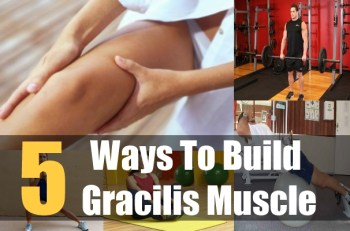 5 Ways To Build Gracilis Muscle