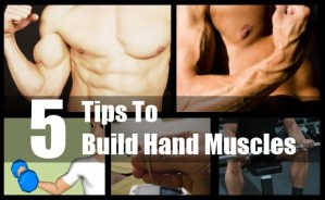 Build Hand Muscles