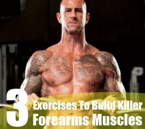 Forearms Muscles