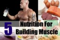 5 Nutrition For Building Muscle