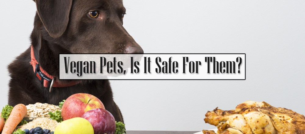 Vegan Pets, Is It Safe For Them?