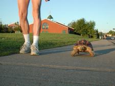 Blogimages Ddm Tortoisewalking02