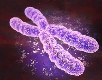 bacteriagenes.jpg
