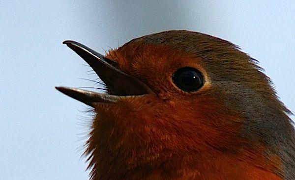 chorusbirdspace.jpg