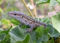 evolve-lizard.jpg
