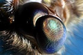 Objects Physicsweb News Thumb 13 2 8 Moth