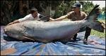 Si 2005 More 06 30 Fish.Ap P1 Catfish