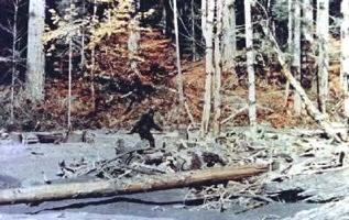 Wp-Content Bigfoot Patterson01-1