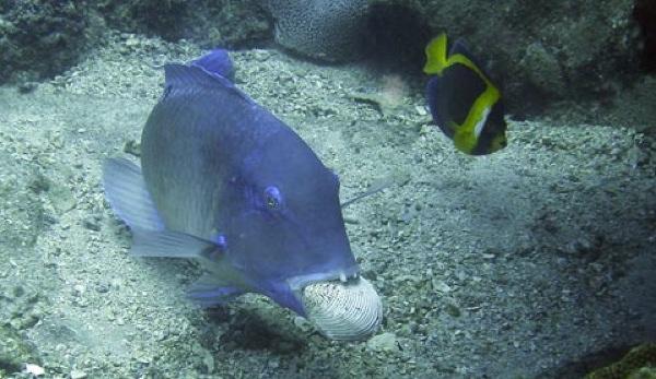 Fishtoooll