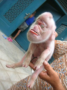Monkeypigletttt