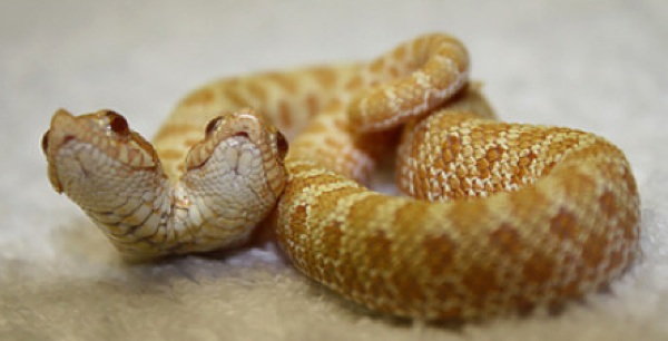 Snakealbinnnnn