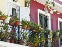 Best Potted Plants For A Balcony Garden - Boldsky.com