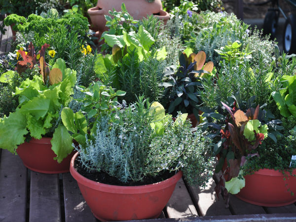 Vegetables That Can Grow In Containers - Boldsky.Com