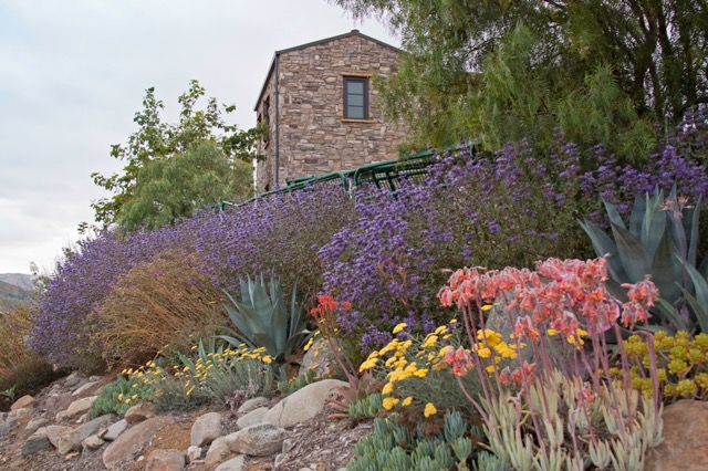 Drought Tolerant Landscape Design Photo Gallery - drought tolerant garden designs