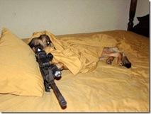 Guard dog 6