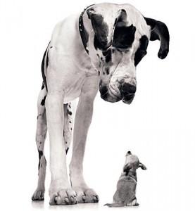Big dog staring down little dog