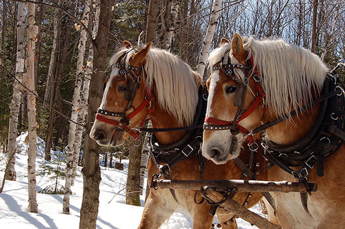 Zarine Khan Cute Wallpaper Free4picz Beautiful Horse Pictures